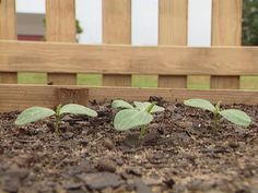 The DIYNetwork.com garden experts show how easy it is to cultivate this popular summertime fruit.