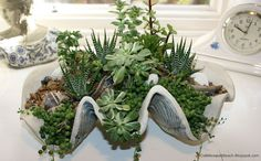 creative succulents in a large clam shell