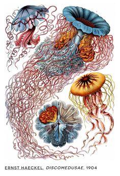 Ernst Haeckel (1904)