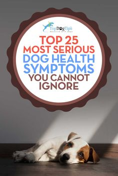 Most Serious Dog Health Symptoms That Cannot Be Ignored. Dogs can be very good at hiding illnesses from their owners. They get this from their ancestors that used to hide when they were sick, as a sick dog was vulnerable out in the wild. Sometimes the symptoms they are showing don't seem severe enough to warrant a trip to the vet, but there are some dog health symptoms that cannot be ignored. #dogs #doghealth #symptoms #pets