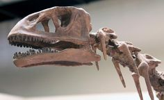 A brief description with facts about the Isanosaurus extinct dinosaur Crane, Natural History, Fossils, Lion Sculpture, Statue, Extinct, Facts, Dinosaurs, Fossil