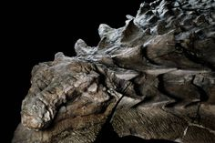 """Nodosaur Fossil  Dinosaur """"Mummy"""" Unveiled With Skin And Guts Intact http://all-that-is-interesting.com/nodosaur-fossil"""