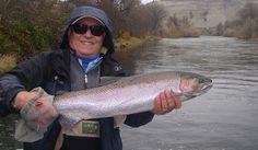 Rich's Klamath Chrome 1/08 Klamath River, Sacramento River, River Lodge, Fall River, Trout, Fly Fishing, Chrome, Photos, Pictures