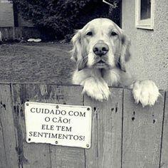 Cuidado com o cão! ele tem sentimentos