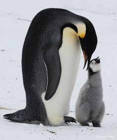 Penguin Mom & Baby- Image to Paint