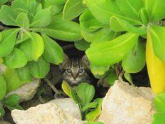 Wild kittens on Antigua