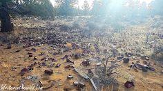 Writer in the Wild: Oregon Badlands Wilderness: Larry Chitwood Trail