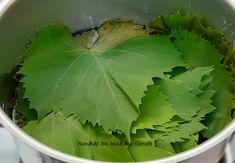 Frunze de vita-de-vie la saramura - Bunătăți din bucătăria Gicuței Plant Leaves, Plants, Food, Canning, Essen, Meals, Plant, Yemek, Eten