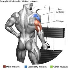 TRICEPS - ONE ARM CABLE TRICEP EXTENSION REVERSE GRIP
