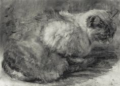 Michael John Davis  - Whole Cat  -charcoal on Paper.