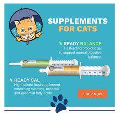 High Calorie Meals, Essential Fatty Acids, Cat Stuff, Pet Care, Vitamins, Cats, Gatos, Kitty Cats, Cat Breeds