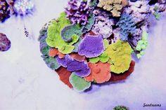 10 Tips on Designing a Freshwater Nature Aquarium Saltwater Fish Tanks, Saltwater Aquarium, Freshwater Aquarium, Aquarium Fish, Aquarium Ideas, Marine Fish Tanks, Marine Tank, Coral Reef Aquarium, Marine Aquarium