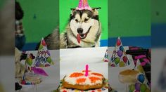 Contact us for Doggie Bag Cafe, Dog Birthday Cakes, Organic Gourmet Dog Food and Bakery Treats We Cater to Your Pet's Desire! Dog Birthday, Birthday Parties, Doggie Bag, Cesar Millan, Party Catering, Dog Boutique, Fundraising Events, Chefs, Dog Food Recipes