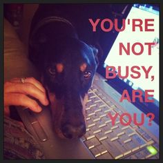 Story of my life :) Wouldn't change it for anything!! #dobermanpinscher