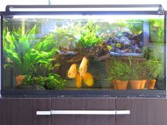 potted plants discus tank