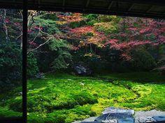 瑠璃光院 今年じゃなかったらもっと綺麗だったことでしょう(; ;) #京都 #紅葉 #瑠璃光院 #kyoto #rurikoin