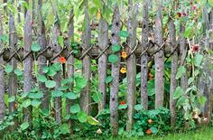organic fence Wooden Fences, Picket Fences, Vegetable Garden, Outdoor Structures, Organic, Rustic, Plants, Flowers Garden, Images