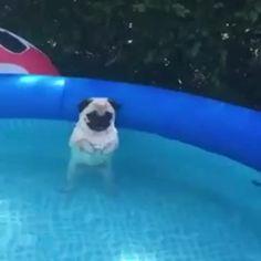 pondwitch:   water goblin - ¯\_([̲̅bernie2016])_/¯   godpenis