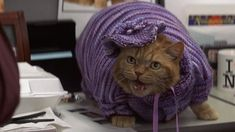 Meatball is a hefty orange tabby (actually played by a thin cat padded inside of the outfits he models) in the Adam Sandler / Jack Nicholson comedy Anger Management (2003).