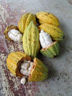 http://blog.edeserzes.hu/kakaoparadicsomok-6-brazilia/