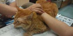 Vemale.com - Seekor kucing bertugas sebagai 'bantal' di klinik kesehatan tradisional Cina ini.
