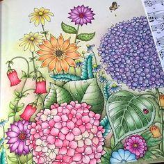 Hydrangea garden #ivyandtheinkybutterfly #johannabasford #polychromos #coloriage #colredpencils #adultcoloringbook #adultcoloring #colouringforadults #eriy#beautifulcoloring #coloring