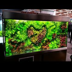 Green wall...underwater! Just need to cover up that little piece of 'egg crate' plastic. Happy San Valentine's day!tank credit by Oliver Knott