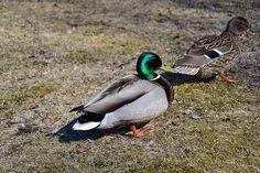 Animal Pictures, Bird, Photography, Animals, Photograph, Animales, Animaux, Pet Pictures, Birds