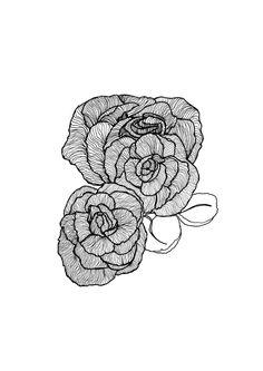 Trio of Peonies Peony Botanical Illustration by StaggIllustration