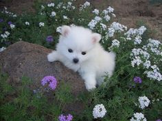Puppy | via Tumblr on We Heart It