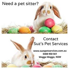 Do you need a pet sitter this Easter? Contact me now to book. Free meet and greet for new clients.   #petcare #petminding #lovemyjob #wagga #waggawagga #2650 #waggabusinesses #easter #eastercountdown #doglovers #catlovers #bunnylove #suzspetservices - http://ift.tt/1HQJd81