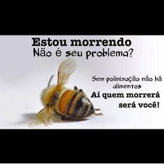 Se as abelhas desaparecerem todo nosso planeta estará comprometido. Não haveria mais polinização e não poderíamos mais encontrar: Maçãs, cenouras, limões, melancias, citrinos, peras, amêndoas, pêssegos, kiwis, castanhas, cerejas, damascos, ameixas, melões, tomates, abobrinhas, soja, girassol, cebola, pepino, aipo, couve, couve-Flor, brócolos, etc.iinseto
