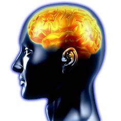 Vida Lúcida: El cerebro humano.