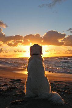 Dog Beach Sunset alone