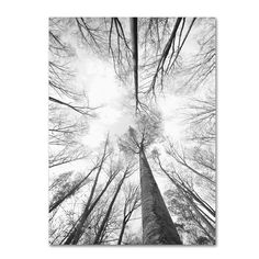 Trademark Fine Art 'Recall the Days' Canvas Art by Philippe Sainte-Laudy, Size: Floating Brushed Aluminum Black Artist Canvas, Canvas Art, Canvas Prints, Canvas Size, Black And White Landscape, Nebraska Furniture Mart, Road Trip Usa, Landscape Prints, New Wall