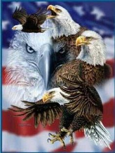 ~ American Bald Eagle ~