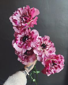 Ranunculus – Home Decor Gardening Flowers Ranunculus Centerpiece, Ranunculus Boutonniere, White Ranunculus, Peonies Bouquet, Bridal Bouquets, Rainbow Bouquet, Butterfly Plants, White Butterfly, Flowers