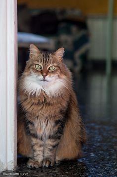 Smilla, una gatta che ho visto crescere.
