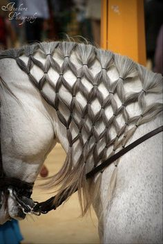 Mane braid.  Incredibly fine work, especially when you only have hooves to work with!