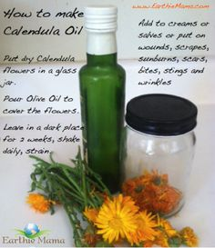 Growing Calendula and making your own first aid cream!