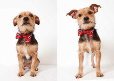 Supermodel Pets Part 3: More Humane Society of New York Adoption Portraits by Richard Phibbs - Chai