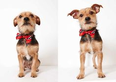 Fashion photographer Richard Phibbs with another batch of adorable adoption glamour shots for the Humane Society of New York.