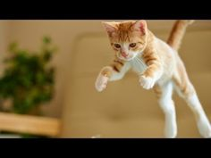 Epic Funny Cats Jump Fail 2014-2013 - YouTube