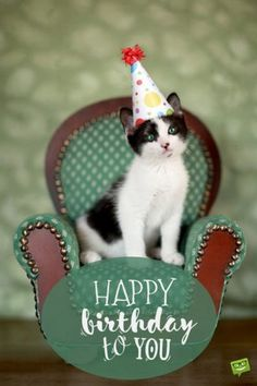 """Birth Day QUOTATION – Image : Quotes about Birthday – Description 101 Funny Cat Birthday Memes – """"Happy birthday to you."""" Sharing is Caring – Hey can you Share this Quote ! Happy Birthday Crazy Lady, Cute Birthday Wishes, Birthday Blessings, Happy Birthday Messages, Happy Birthday Images, Birthday Love, Happy Birthday Greetings, Animal Birthday, Birthday Pictures"""