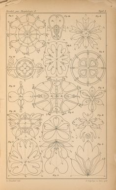 A plate of possible pattern choices...  E.H.P.A. Haeckel - Morphologie I. Pyramidale Grundformen (1866)