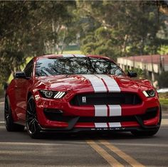 Ford Mustang Shelby Gt500, 2015 Ford Mustang, Ford Mustang Eleanor, Mustang Cobra, Ford Gt40, Ford Transit Custom, Shelby Gt 500, Dream Cars, Custom Muscle Cars