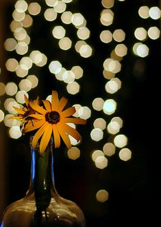 Beautiful Bokeh Photography