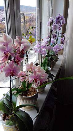 Fairy Garden Plants, Orchids Garden, Orchid Plants, Types Of Flowers, All Flowers, Beautiful Flowers, Flower Centerpieces, Flower Decorations, Indoor Orchids