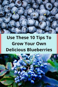 #Use #Tips #Grow #Own #Delicious #Blueberries Blueberry Season, Aesthetic Shoes, Wedding Heels, Grow Your Own, Lip Care, Grunge Hair, Almond Nails, Acrylic Nail Designs, Bottle Crafts