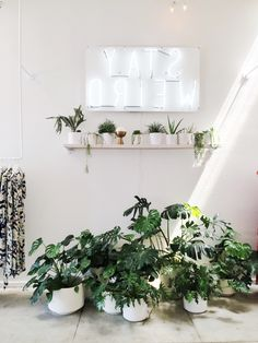 Obsessed with plants lately - this combination is a botanical wonderland! /